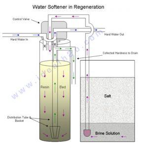 WS-in-Regeneration